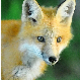 Foxyez's avatar