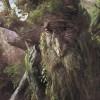 Arcs Droits Coche Et Merlin - dernier message par bois debout