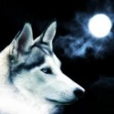 Wolf Austral's Foto