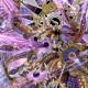 Avatar de kazeblack