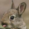 Bug Squish/Option Request list - last post by shnurui