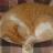 strycat
