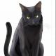 Hakuoro1992's avatar