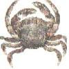 introtojavascript.com looki... - last post by alexpnd