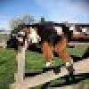 STANCO DEL VTRONIC CHE BRUC... - last post by riccio3282