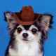 Leafofthecats's avatar
