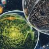 The Feral Orks - last post by Nazgrim Mektoof
