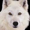 louve blanche