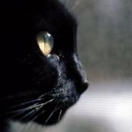 panther7