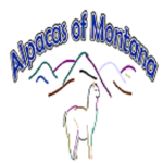 alpacasmontana