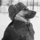 JuostenKustu's avatar