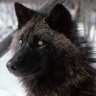 Harl Windwolf