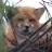 Foxing772