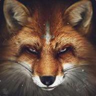 deman_fox