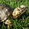Turtle ID - last post by turtlefanatic
