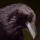 ninzaco's avatar