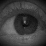 The_Peeled_Eye