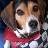 Stop with the easy solution... - last post by The_Beagle_Baron