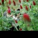 babalina's Photo