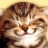 Blixtkatt's avatar