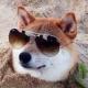 snoutmate's avatar