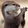 Otto the Otter