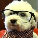 J-dog's Photo
