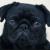 sebsisaboss's avatar