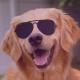 Zapejo's avatar