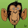 Chimpanzee's Photo