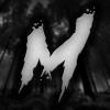 NIArms? - last post by MarkusCZ