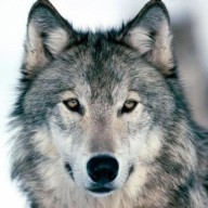 Dogsonofawolf
