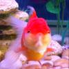Fishlet