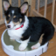Puppy on a Roomba