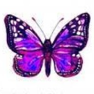 purplewabbit