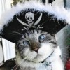 Free Games!!! - last post by The cat pirate