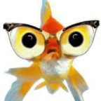 Portrait de merlanfrit