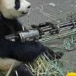 mini gun panda