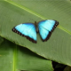 P38588 avatar