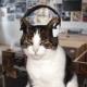 Zenergyx3's avatar