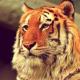 fatmunchiez's avatar