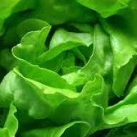 lettucemode