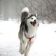zagejk2's avatar