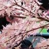 tethering motorola defy+ et free - dernier message par tykayn