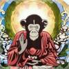 Monkey Sage's Photo