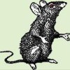 No Access to Download Library - last post by Willy the Rat