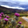 OFlowerofScotland's Photo