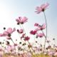 jiniya's avatar