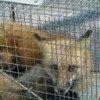 Wildlife Removal & Bee Specialists - last post by catchitwild