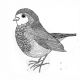 Aron Carroll's profile image